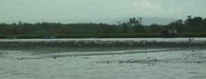 Pulau burung Progo